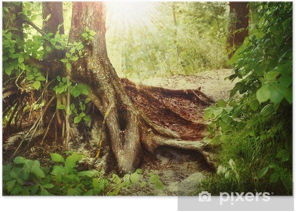 Poster Misty old forest - Wälder