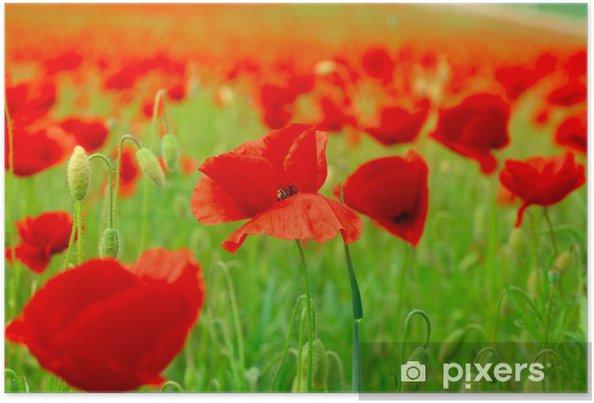 Poster Mohnfeld - Blumen