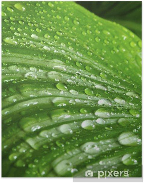 Poster Morgen fällt auf grünen Blättern - Freiheit
