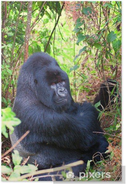 Poster Mountain Gorilla Silver - Säugetiere