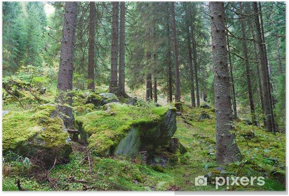Poster Nadelwald - Wälder