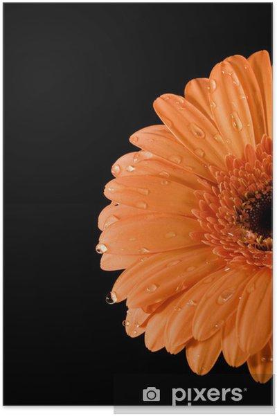 poster nass orange gerbera schwarzer hintergrund pixers wir leben um zu ver ndern. Black Bedroom Furniture Sets. Home Design Ideas