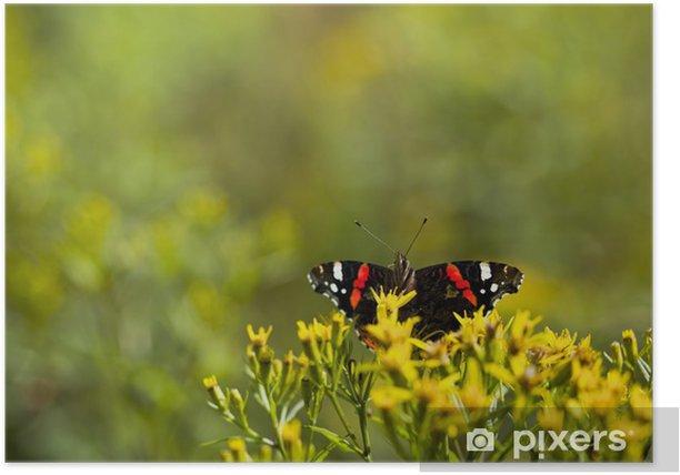 Poster Nette kleine Meerjungfrau Admiral Schmetterling auf gelbe Blume - Andere Andere