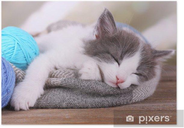 Poster Nettes kleines Kätzchen schlafen auf Decke, auf hellem Hintergrund - Säugetiere