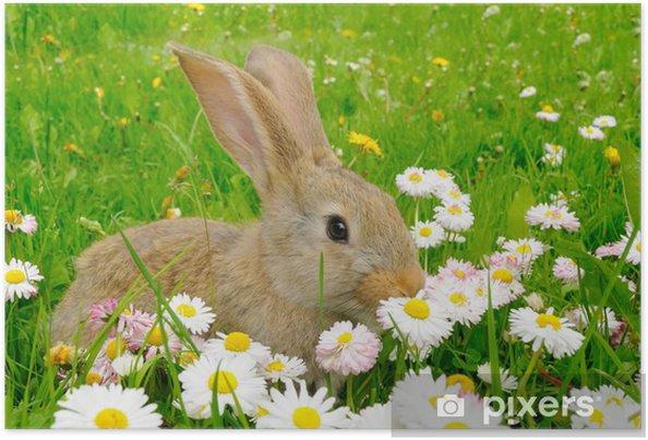 Poster Niedlichen Kaninchen Im Garten Mit Blumen