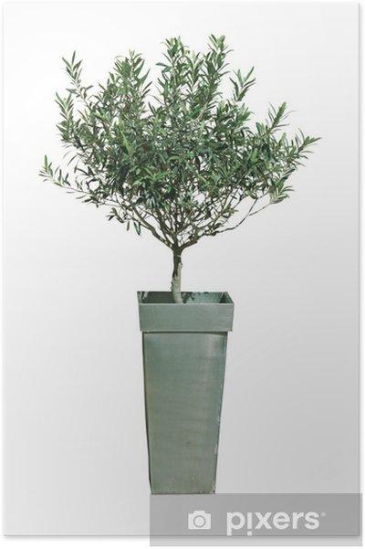 Top Poster Olivenbaum im Topf • Pixers® - Wir leben, um zu verändern &ZJ_16