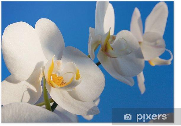 Poster Orchidee - Blumen