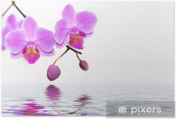 Poster Orchiden - Themen