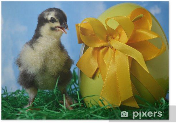 Poster Osterküken (Hühnerrasse Marans) - Internationale Feste