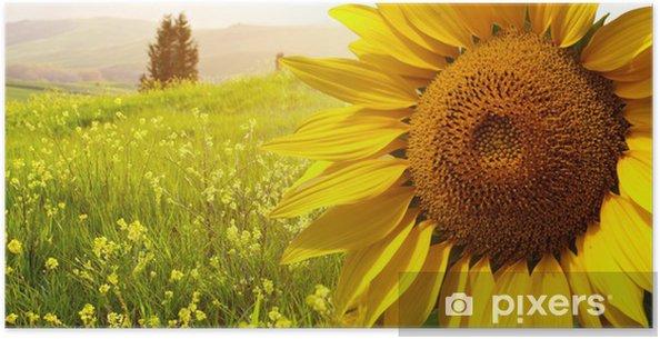 Poster Paesaggio con girasoli in Toscana, Italia • Pixers® - Viviamo ...