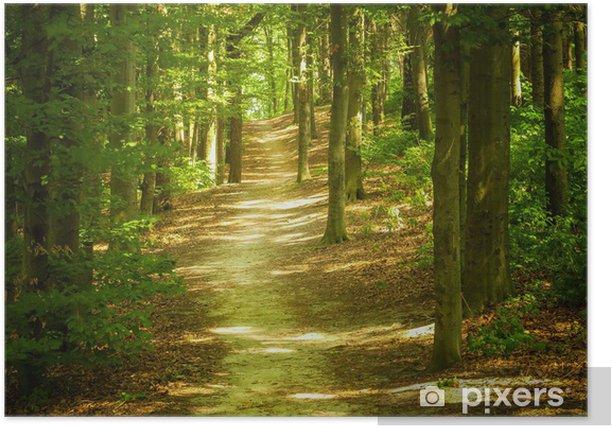Poster Paesaggio forestale - Temi