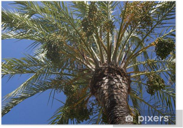 Poster Palme im Sonnenschein - Urlaub