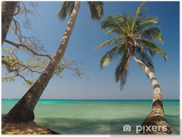 Poster Palmenstrand In Der Karibik Pixers Wir Leben Um Zu