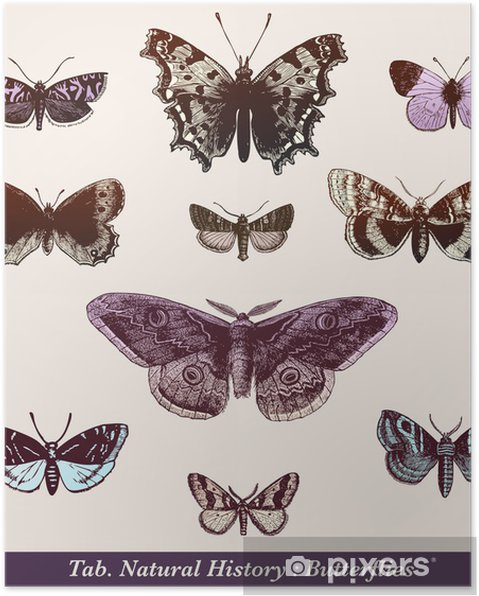 Poster Papillons - Andere Andere