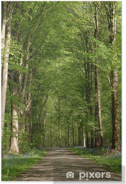 Poster Pfad im Wald - Bäume