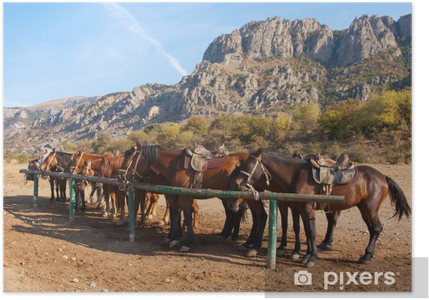 Poster Pferde an einen Pfosten -
