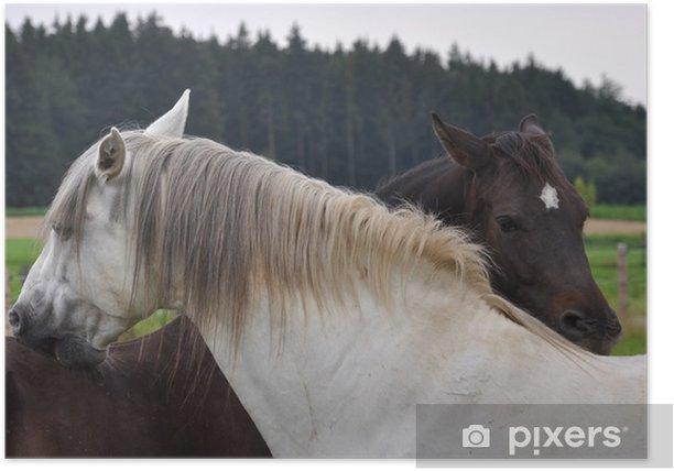 Poster Pferde - Säugetiere