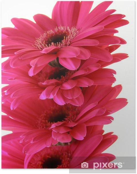 Poster Pink gerbera - Blumen