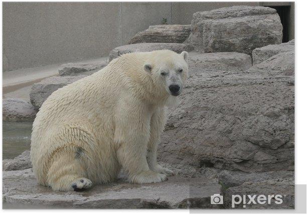 Poster Polar bear - Temi