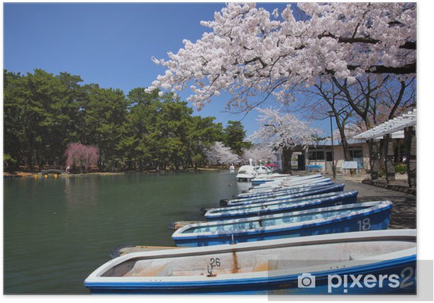 Poster Pond und Sakura - Jahreszeiten