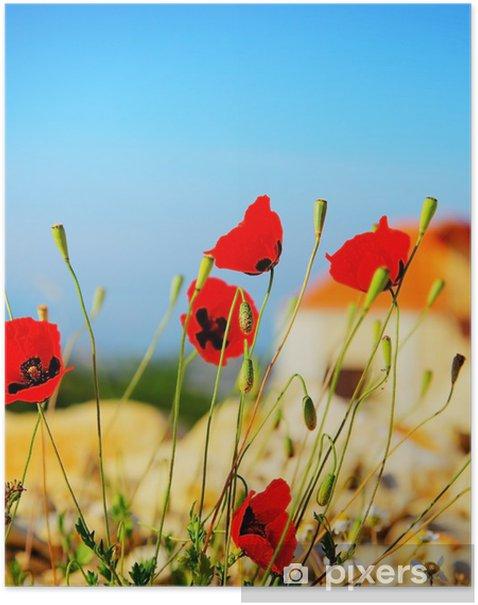 Poster Poppy Blumen Wiese - Blumen