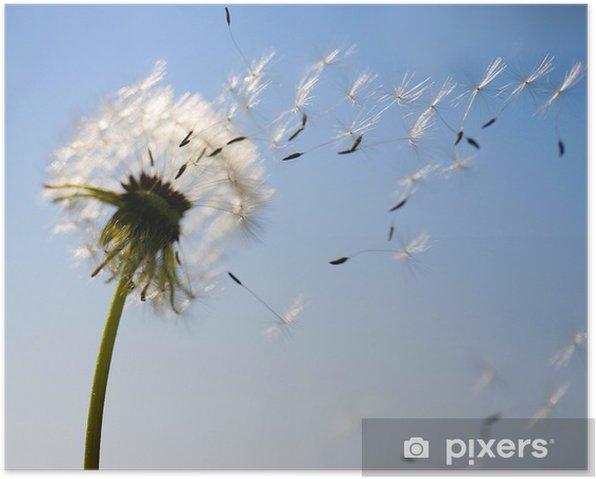 Poster Pusteblume im Wind - Blumen