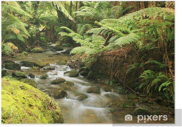 Poster Rainforest Fluss - Themen