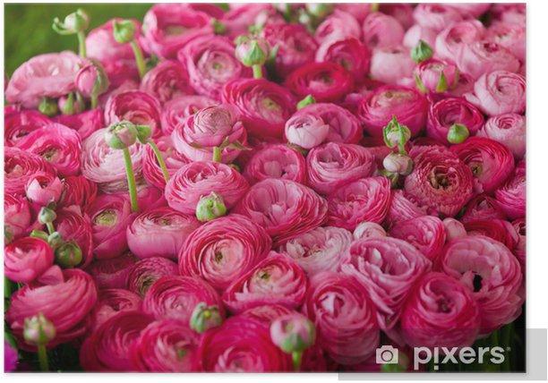 Poster Ranuncoli # 3 - Blumen