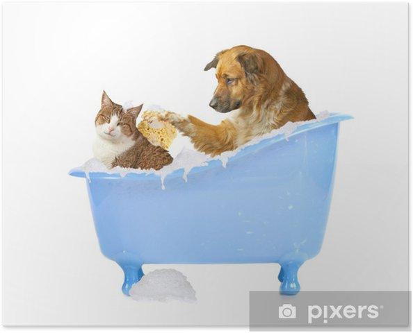 Poster Rapido, cane e gatto nella vasca da bagno • Pixers ...