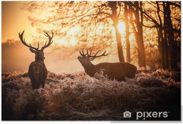 Poster Red Deer in Morgensonne. - Stile
