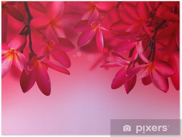 Poster Red Frangipani Fiore Su Sfondo Rosa