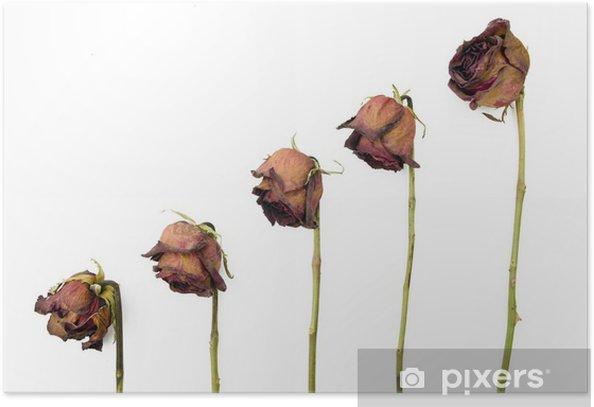 Poster Reihe von 5 alten getrockneten roten Rosen vor einem dunklen Hintergrund - Blumen
