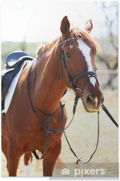 Poster Reinrassiges Pferd auf die Natur Hintergrund - Landwirtschaft