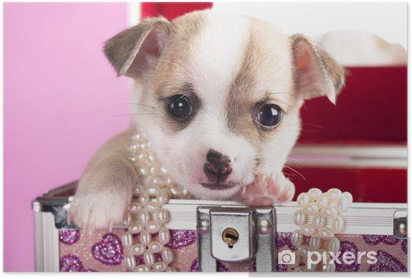 Poster Ritratto Di Un Simpatico Cucciolo Di Chihuahua Di Razza Con