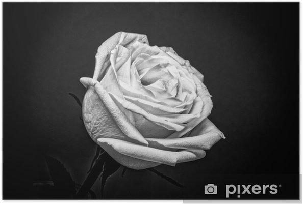 Poster Rosa Bianca Su Sfondo Nero Pixers Viviamo Per Il Cambiamento