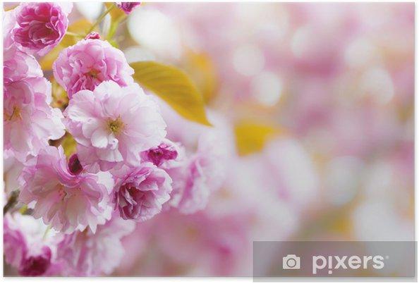 Poster Rosa Fiori Di Ciliegio Sfondo Pixers Viviamo Per Il