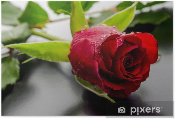 Poster Rosa Rossa Su Sfondo Nero Pixers Viviamo Per Il Cambiamento