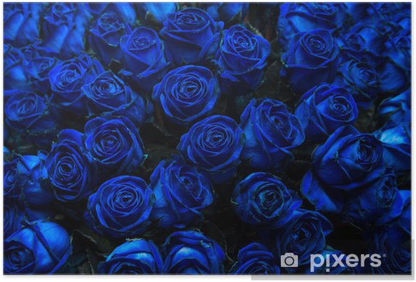Poster Rose Blu