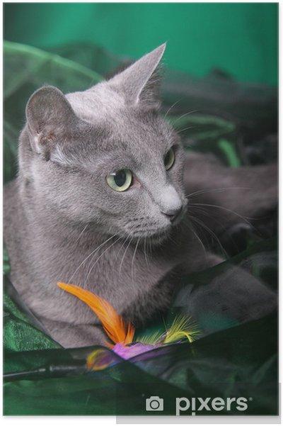 Poster Russisch Blau Katze - Säugetiere