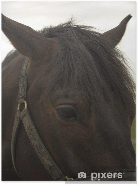 Poster Sad horse portrait - Themen