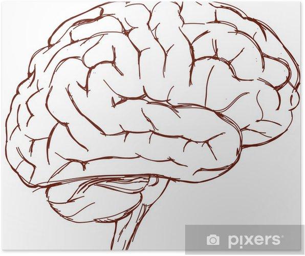 Poster Schizzo del cervello - Salute & Medicina