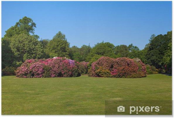 Poster Schöne Blume Rhododendron Büsche Und Bäume In Einem Sonnigen