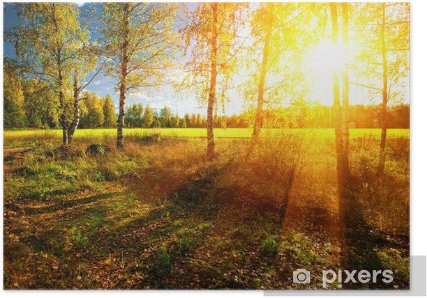 Poster Schöne Landschaft mit Sommer Wald und Sonnenuntergang - Themen
