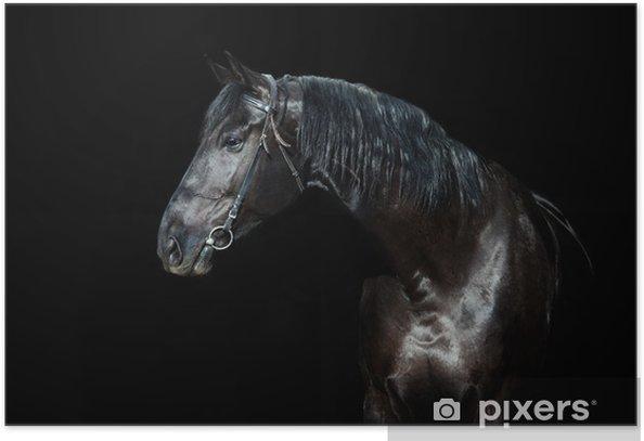 Poster Schwarzes Pferd auf schwarzem Hintergrund isoliert - Hintergründe
