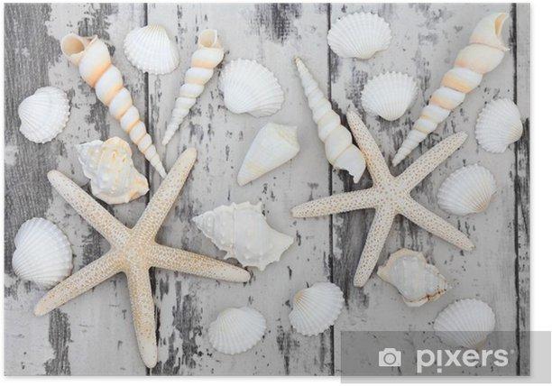 Poster Seashell Schönheit - Unterwasserwelt