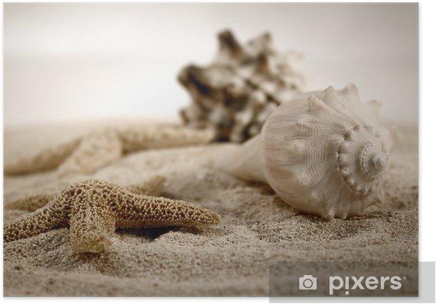 Poster Seashells auf dem Sand - iStaging