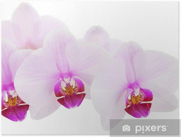 Poster Sfondo Di Colore Rosa Orchidea Tropicale Pixers Viviamo