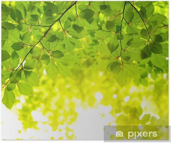 Poster Sfondo Verde Foglie Pixers Viviamo Per Il Cambiamento