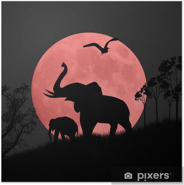 Poster Silhouette Ansicht von Elefanten in der Nacht - Elefanten