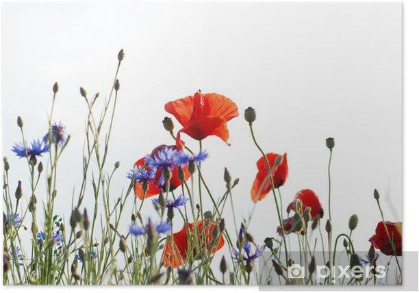 Poster Sommerwiese - Blumen